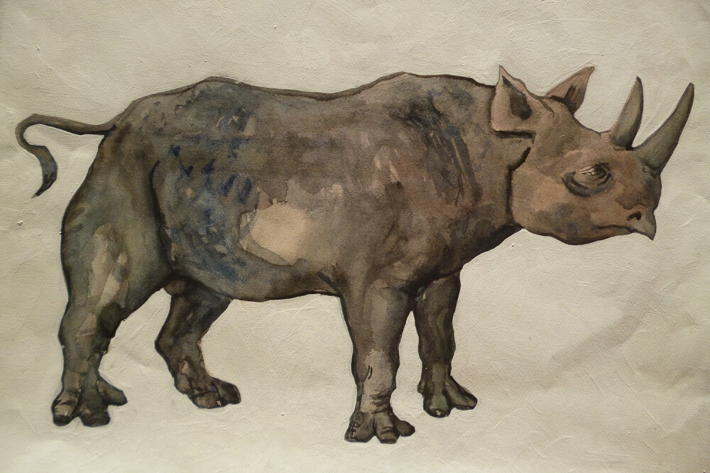 Obernkirchner Nashorn